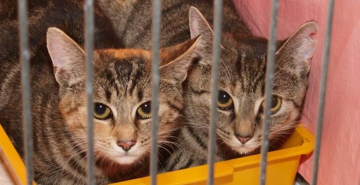 Kočičky.info